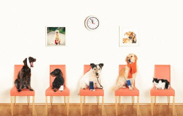 pets waiting in veterinary office