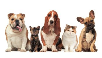 compounded medications for pets and animals